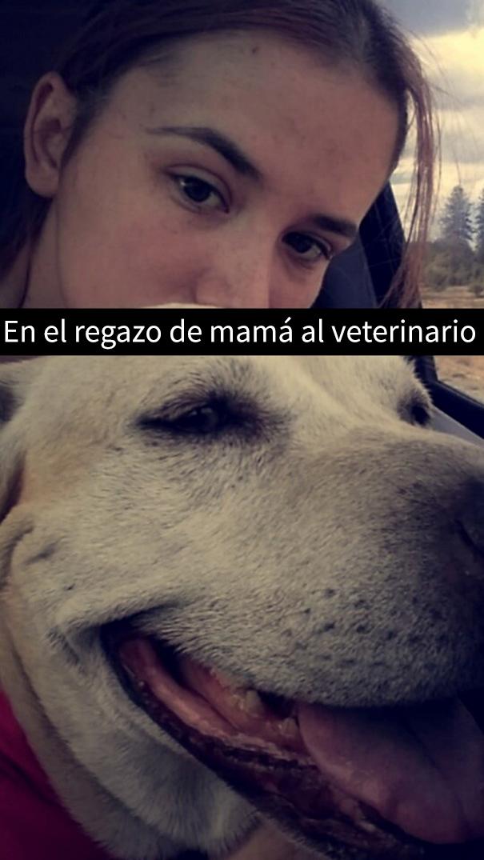 ultimo-dia-perro-snapchat-12