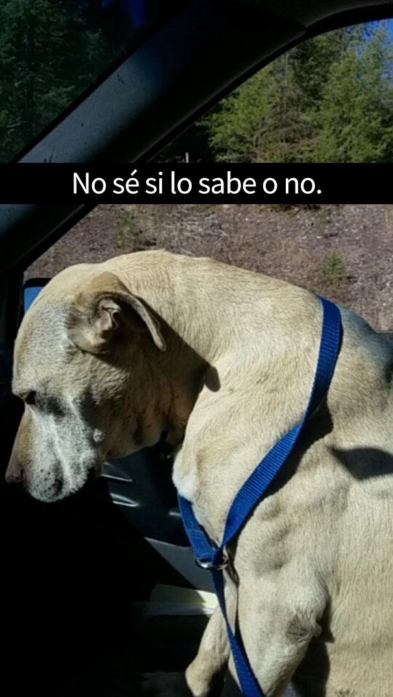 ultimo-dia-perro-snapchat-14