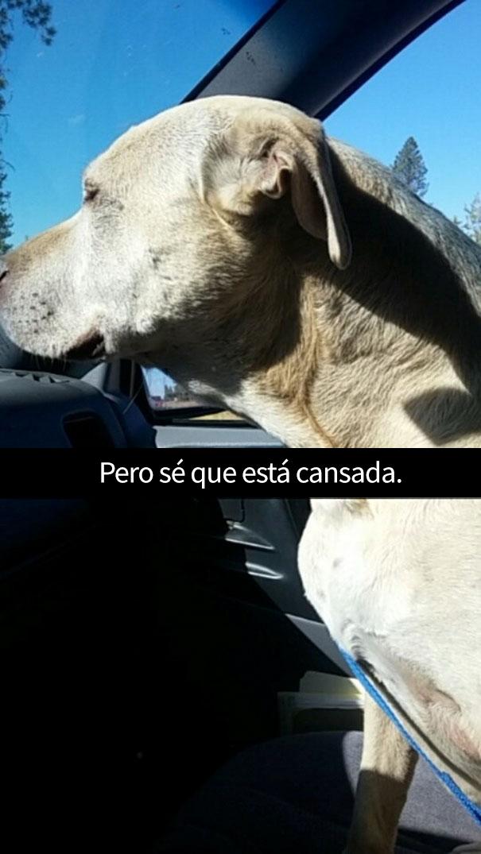 ultimo-dia-perro-snapchat-15