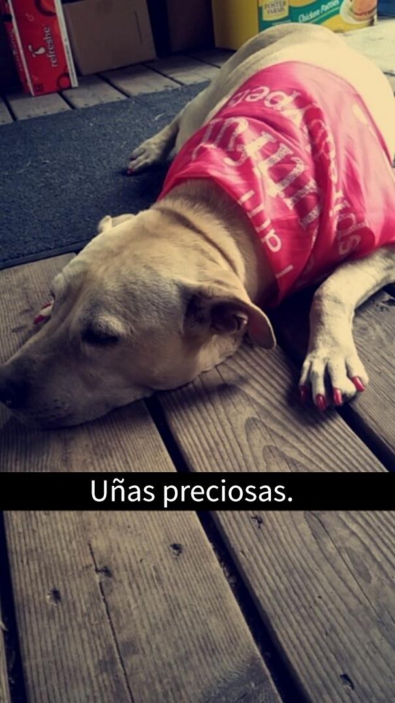 ultimo-dia-perro-snapchat-16