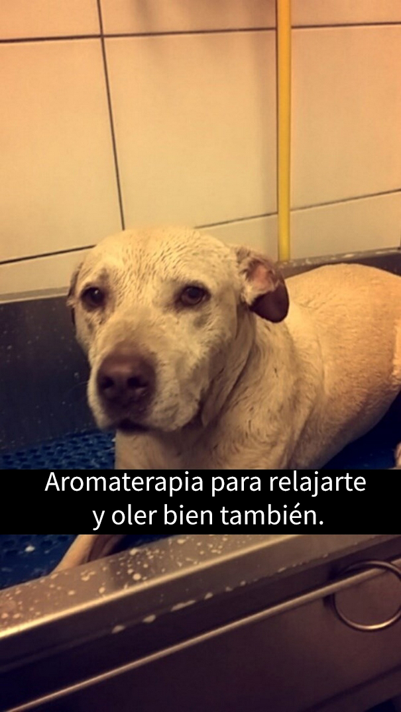 ultimo-dia-perro-snapchat-3