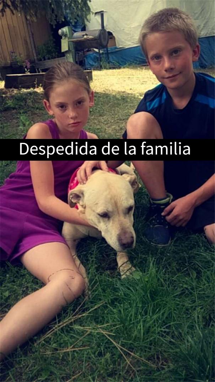 ultimo-dia-perro-snapchat-5