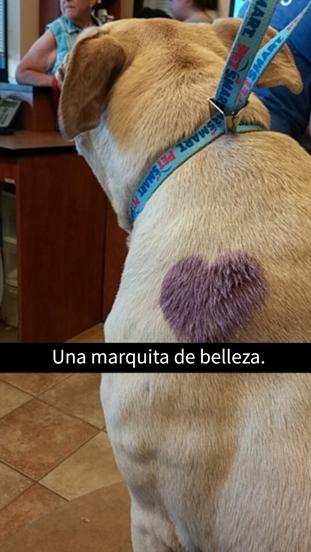 ultimo-dia-perro-snapchat-6