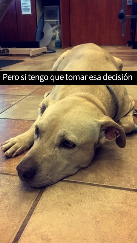 ultimo-dia-perro-snapchat-7
