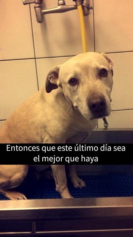 ultimo-dia-perro-snapchat-9