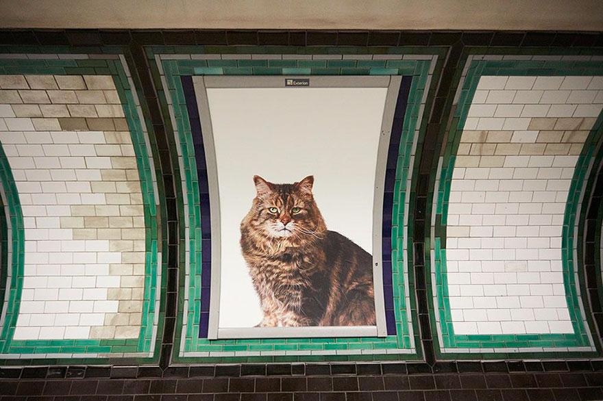 anuncios-gatos-estacion-metro-londres (2)