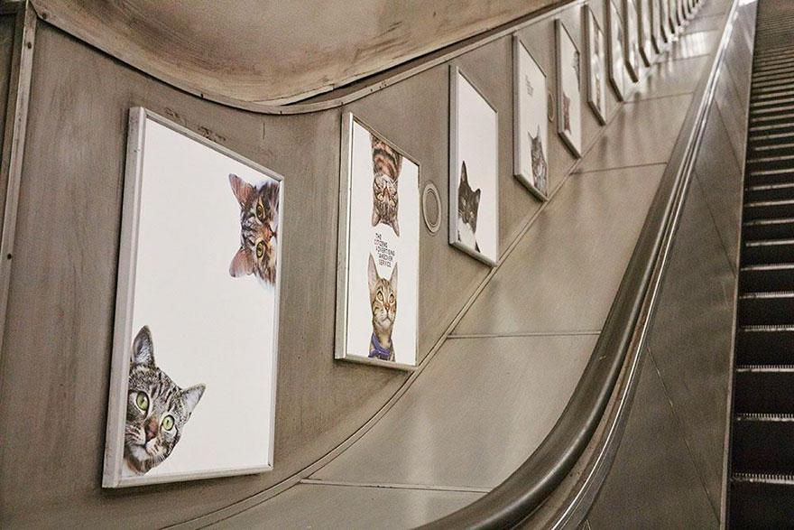 anuncios-gatos-estacion-metro-londres (4)