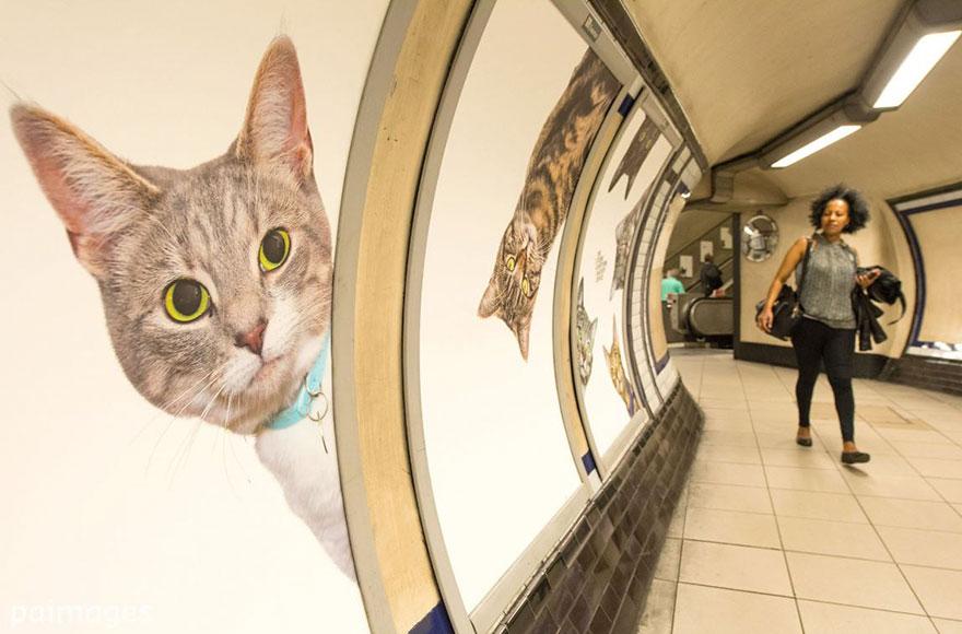 anuncios-gatos-estacion-metro-londres (5)