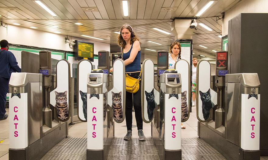 anuncios-gatos-estacion-metro-londres (8)