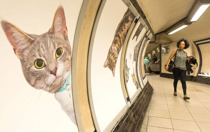 Toda la publicidad de esta estación de metro de Londres ha sido cambiada por fotos de gatos