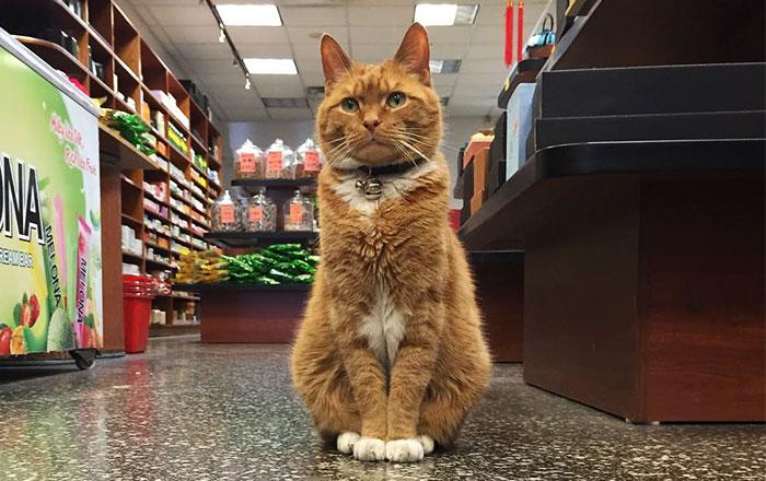 Este gato lleva 9 años ocupándose de su tienda sin tomarse un solo día libre