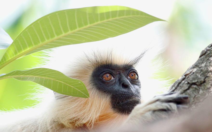 Finalistas a fotógrafo de fauna salvaje del año 2016