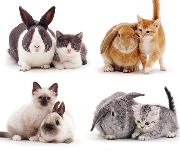 Este fotógrafo retrata a adorables mascotas que parecen hermanos de distinta madre