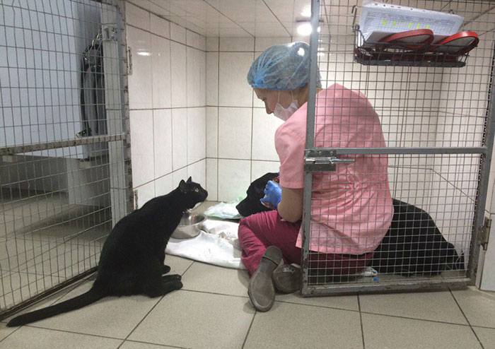 Este gato que no puede caminar se convierte en enfermero para ayudar a animales enfermos y salvar sus vidas