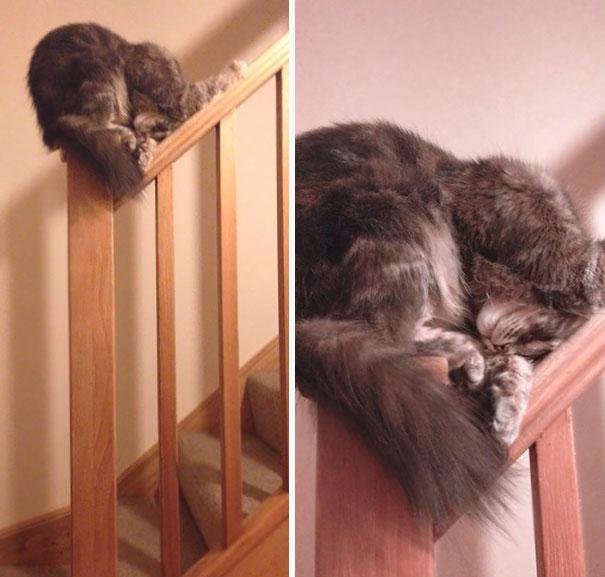gatos-durmiendo-2 (6)