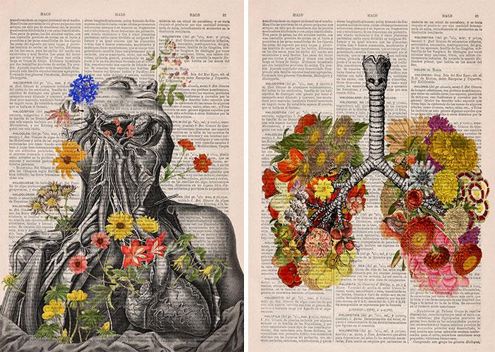 Estas ilustraciones anatómicas con flores insuflan nueva vida a los libros viejos en desuso