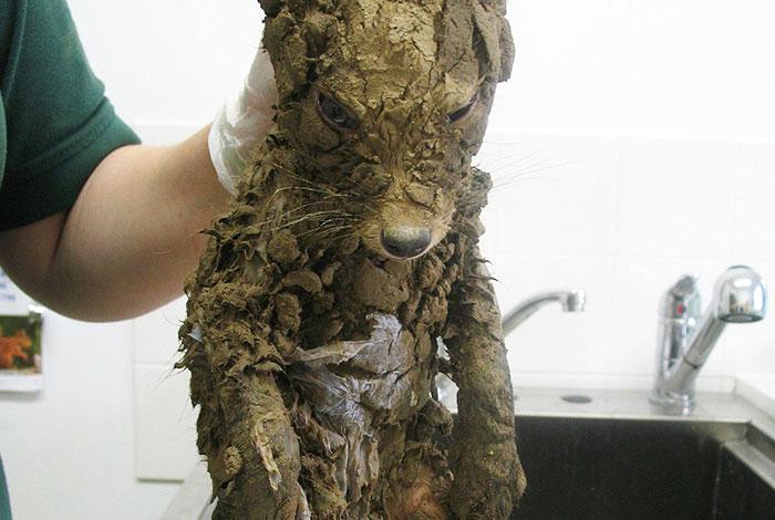 No se pudo identificar a este misterioso animal cubierto de barro hasta que lo limpiaron