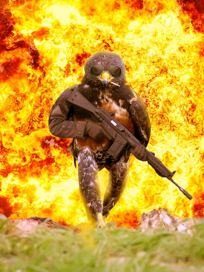 batalla-photoshop-halcon-rudo (3)