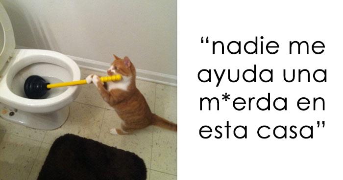 15 Publicaciones sobre gatos en Tumblr de las que es imposible no reírse