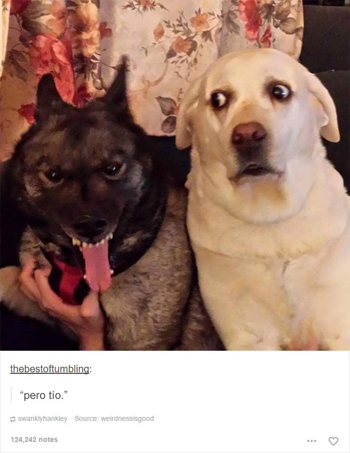 15 Publicaciones Sobre Perros En Tumblr Con Las Que Es Imposible No