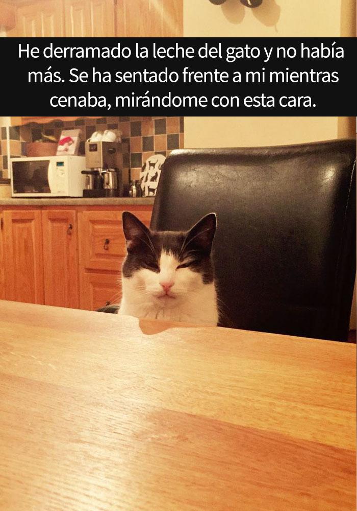 gatos-snapchat-14