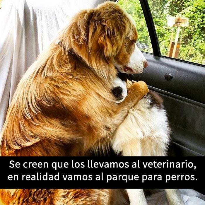 perros-snapchat-4