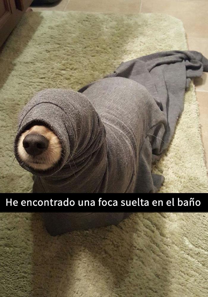 perros-snapchat-7