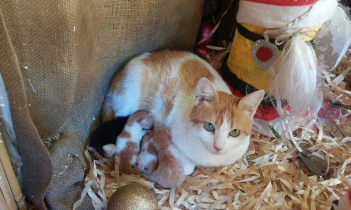 Noah, La Gata Que Tuvo Sus Bebés En Un Belén De Navidad