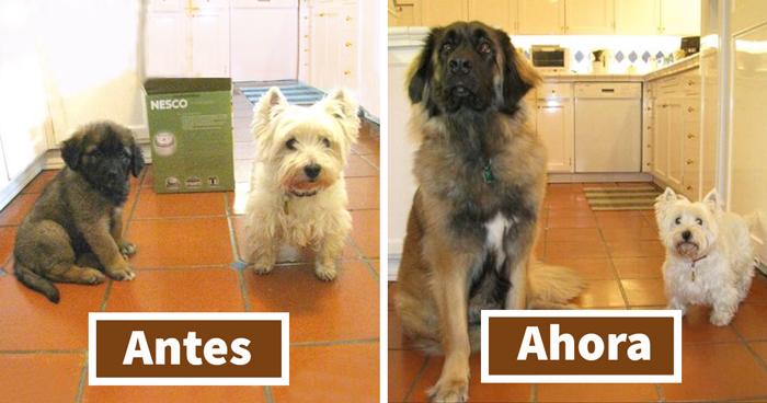 15 Fotos antes y después de animales creciendo juntos