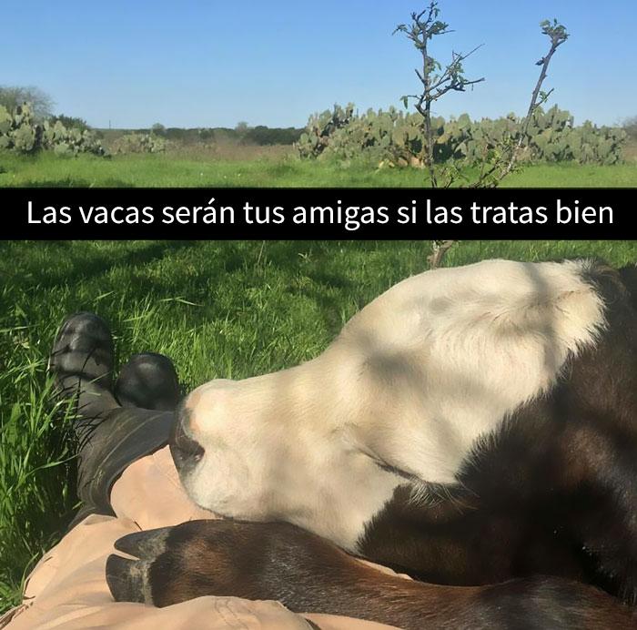 snapchat-animales-14