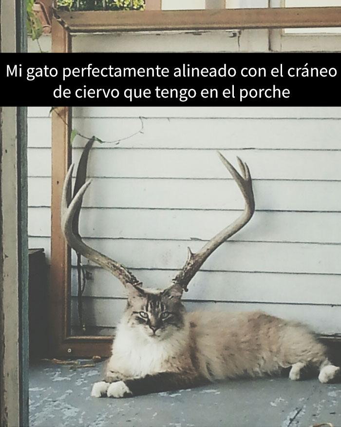snapchat-animales-9