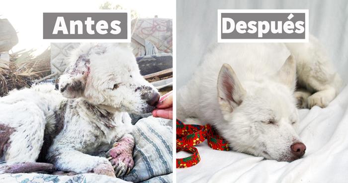 El antes y el después de 15 transformaciones de perros rescatados que muestran lo que puede hacer el amor