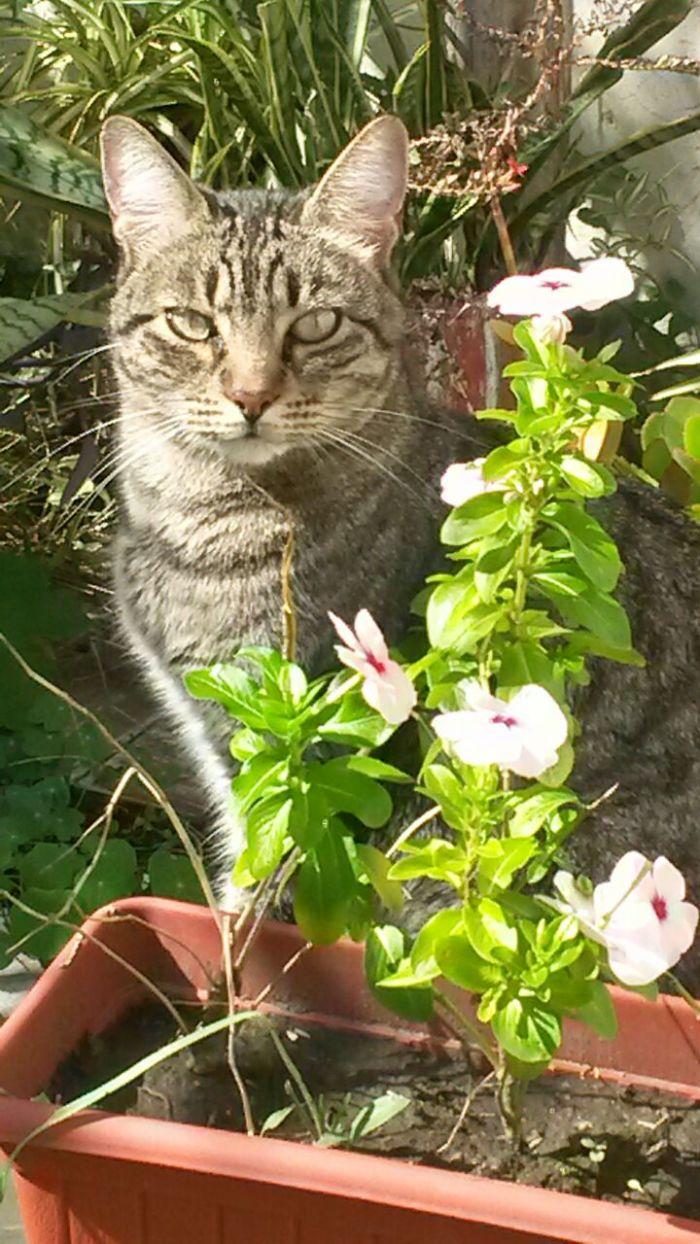 Me DespertÉ Y EncontrÉ A Mi Gato Ecologista ... Un Verdadero Rainbow Warrior!!