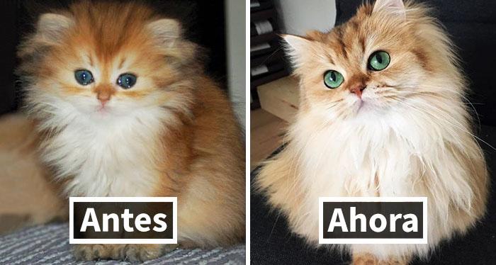 10+ Fotos del antes y después de gatos creciendo (2ª parte)