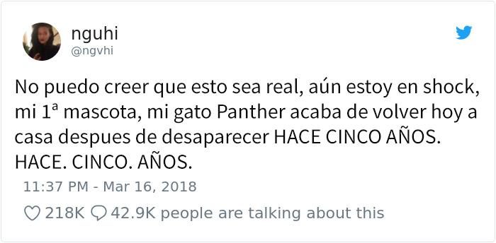 panther-1