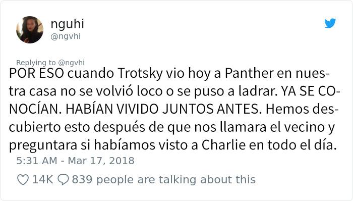 panther-7