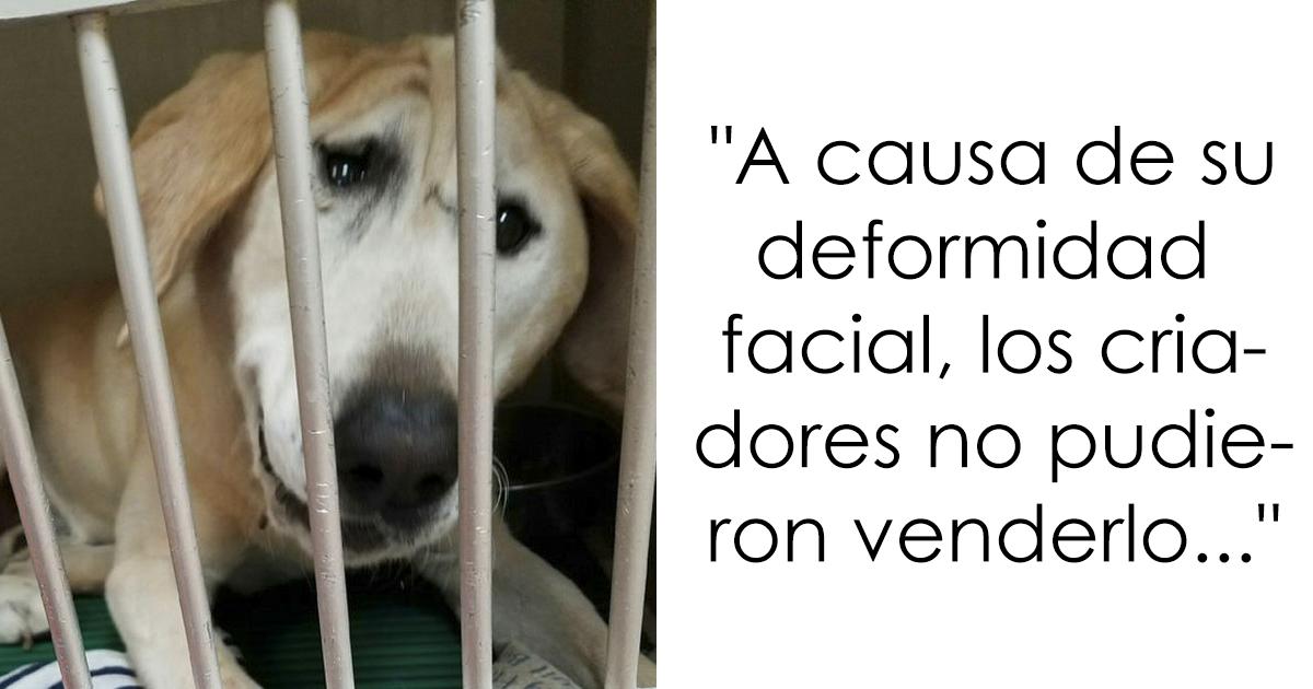 """Este perro desconsolado fue abandonado por su cara """"fea"""", pero tras ser adoptado la diferencia es increíble"""