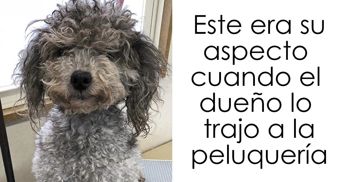 Esta peluquera canina japonesa transforma a los perros de tal forma que se ha vuelto viral