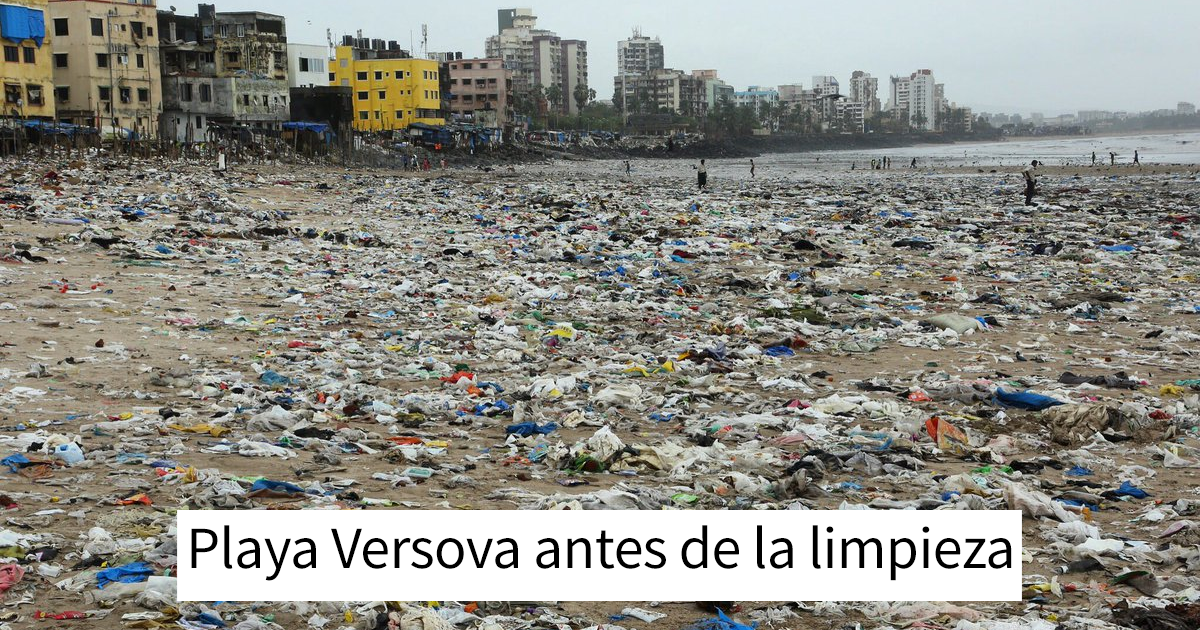 Por 1ª vez en 20 años, las tortugas vuelven a esta playa india tras ser limpiada, demostrando que podemos marcar la diferencia