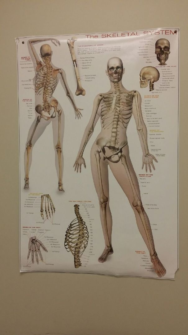 Le Gusta Mover El Esqueleto, Literalmente