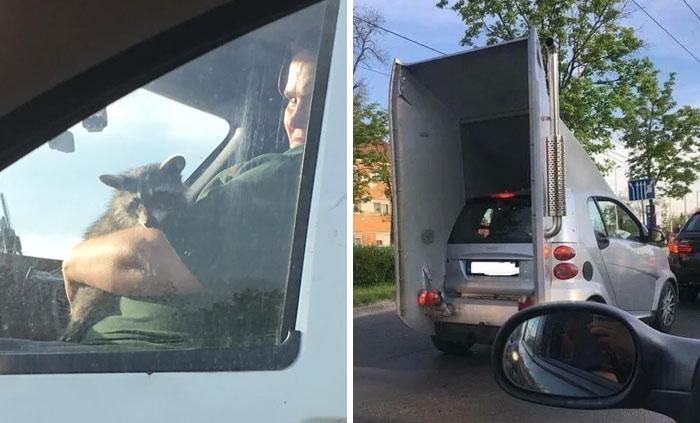 45 imágenes de las cosas más raras que la gente ha visto en la carretera (nuevas imágenes)