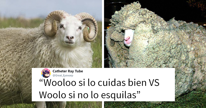 Peta usa al pokemon Wooloo para que la Gente deje de vestir lana, y se burlan de ellos