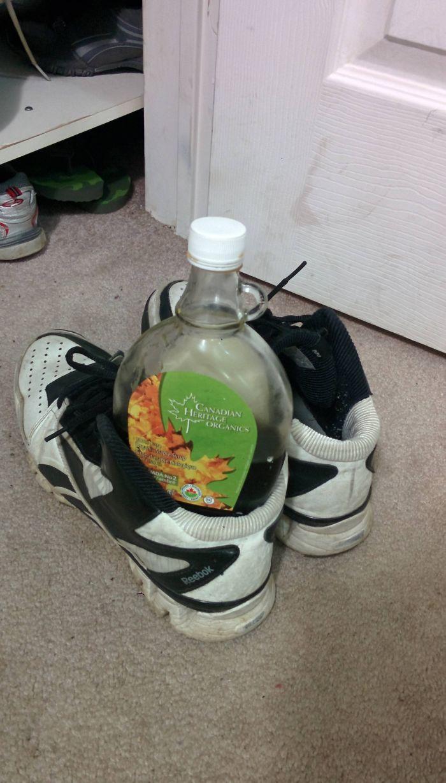 En Australia Hay Que Revisar Los Zapatos Por Si Se Han Metido Criaturas Durante La Noche. En Canadá Sin Embargo...