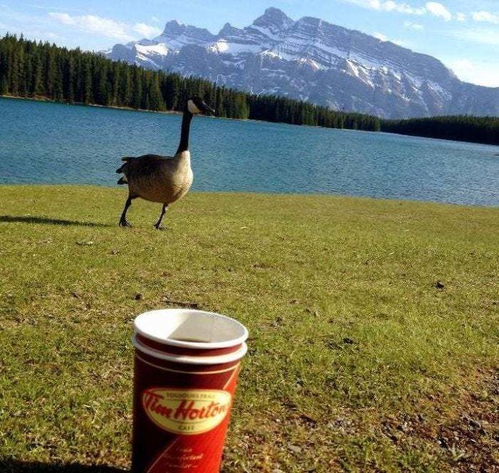 Feliz Día De Canadá