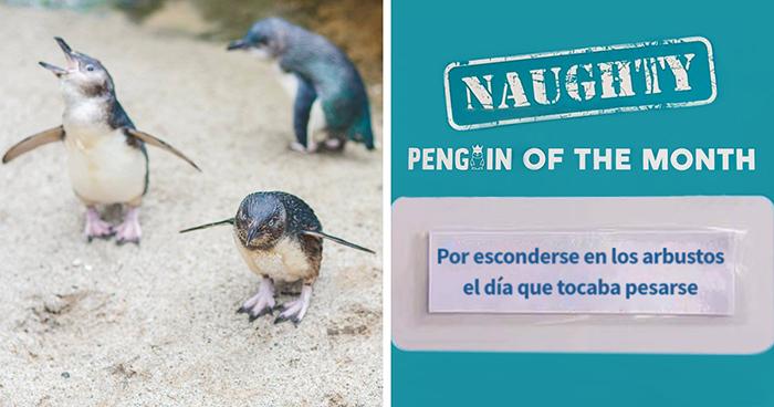 """Este acuario elige al pingüino más """"malo"""" cada mes, y sus """"crímenes"""" son muy divertidos"""