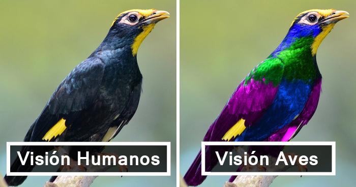 Así Es Cómo Ven El Mundo Los Pájaros Comparado Con los Humanos Y Es Alucinante