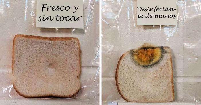 Se vuelve viral el experimento científico con pan de molde que han realizado en esta escuela de primaria