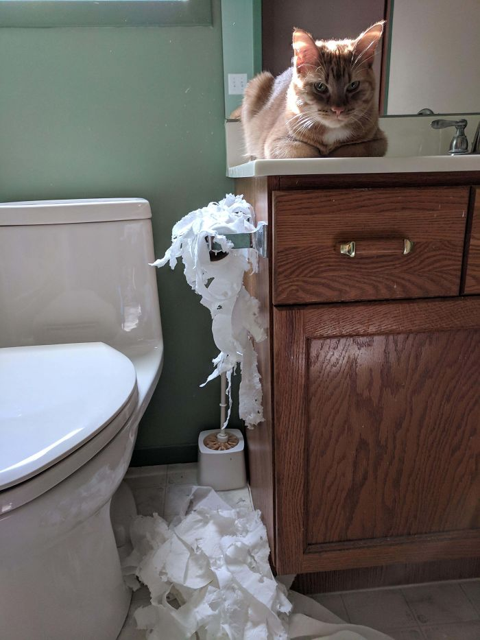 Encerré Al Gato En El Baño Mientras Cocinaba Porque No Me Dejaba En Paz. Se Ha Vengado.