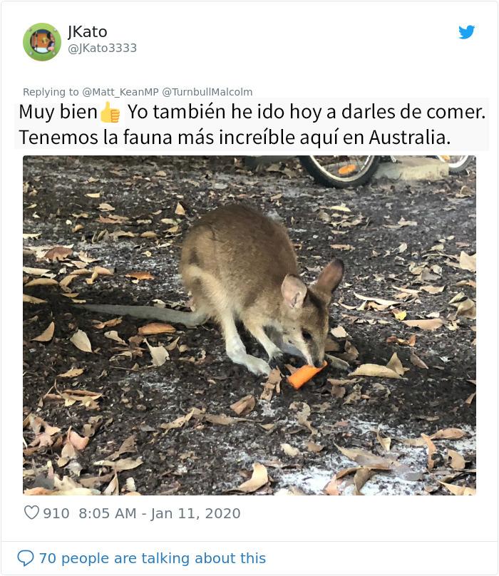 Los animales supervivientes de los incendios de Australia se mueren de hambre, así que se están lanzando toneladas de vegetales desde aviones