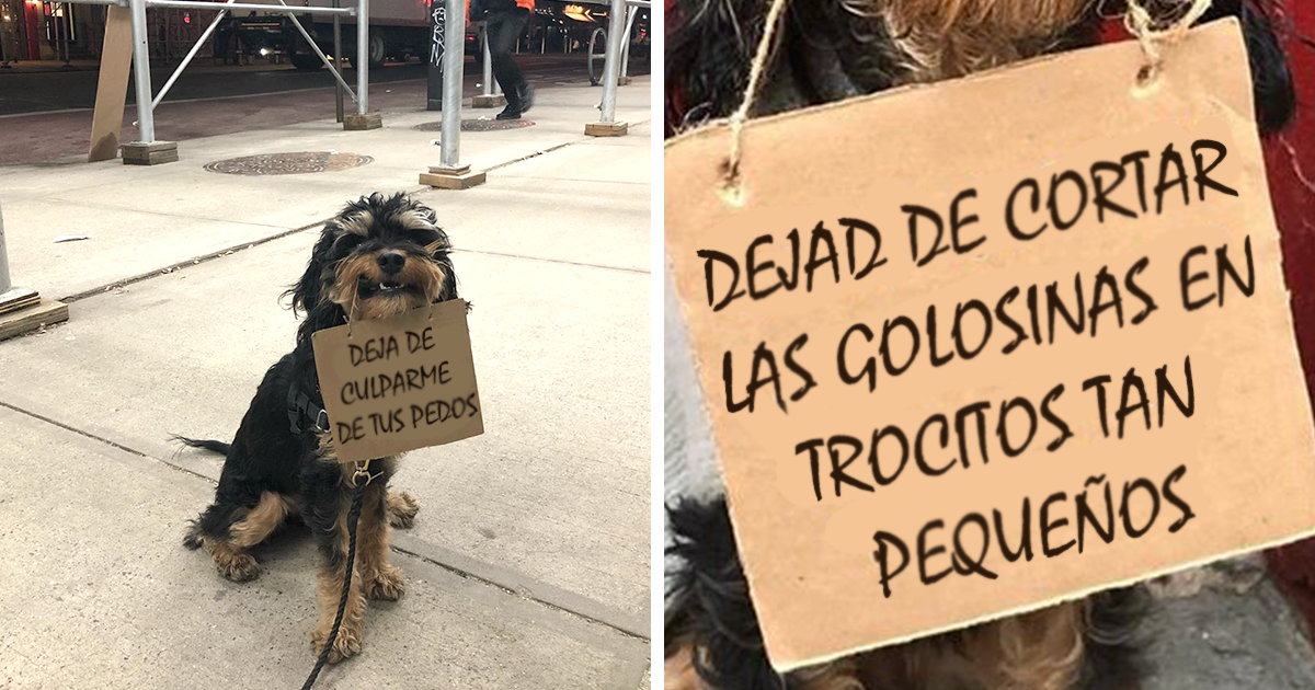 Este perro protesta contra molestas cosas cotidianas con divertidos carteles (12 imágenes)